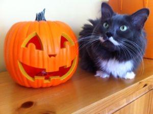 Smokey getting into the Halloween spirit