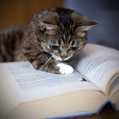 cat-with-book-1